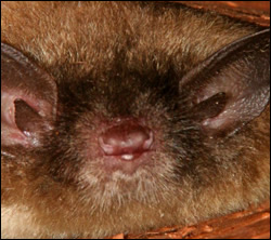 Palmetto bat removal