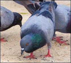 Palmetto bird control