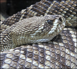 Palmetto snake control